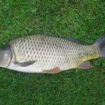 рыба4