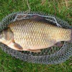 рыба6
